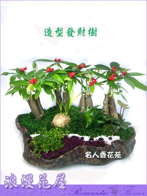 造型發財樹盆栽 3-77