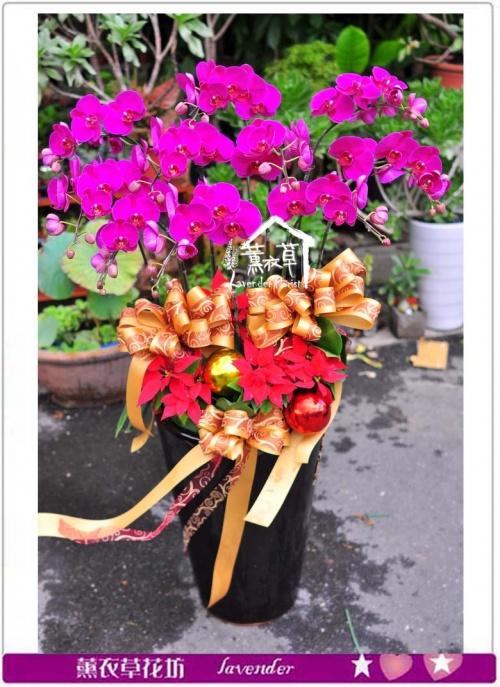高雅蝴蝶蘭10朱c100317