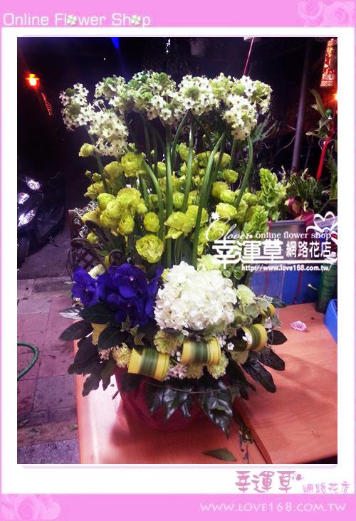 C40優質盆花