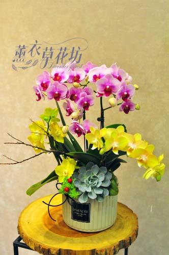 蝴蝶蘭設計107101712