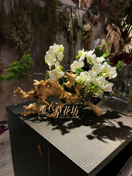 蝴蝶蘭/蘭花盆栽設計 110012901