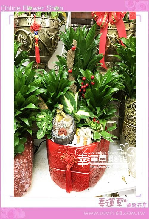 E122阿波羅組合盆栽