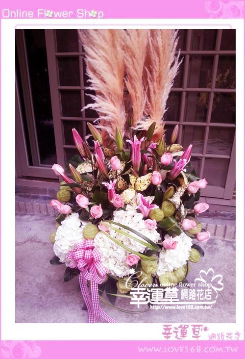 C45優質盆花