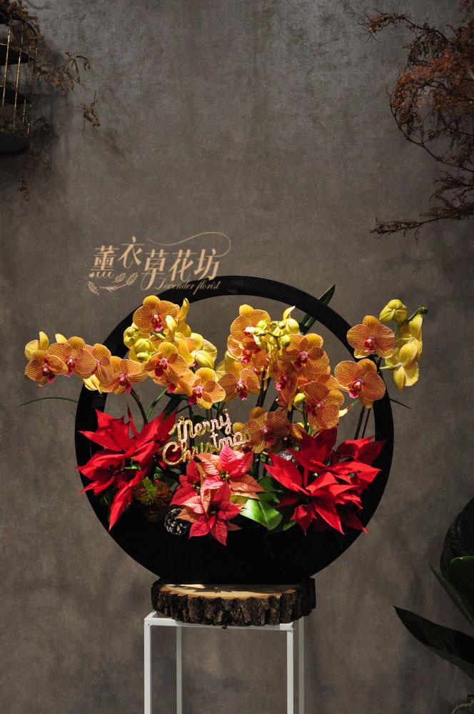 高雅蝴蝶蘭108122502