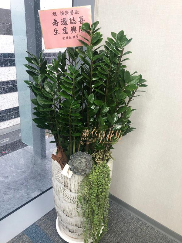 金錢樹盆栽 110062108