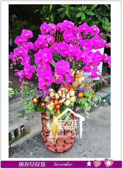 蝴蝶蘭設計 106071901
