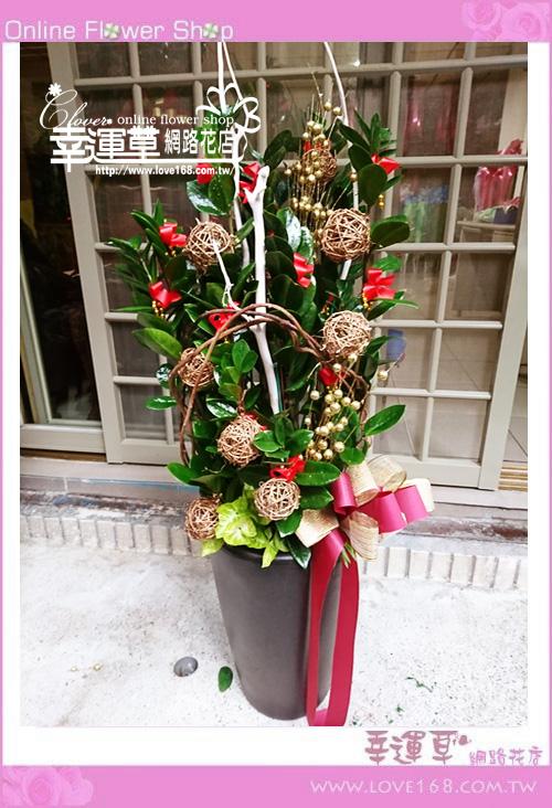 E15金錢樹盆栽