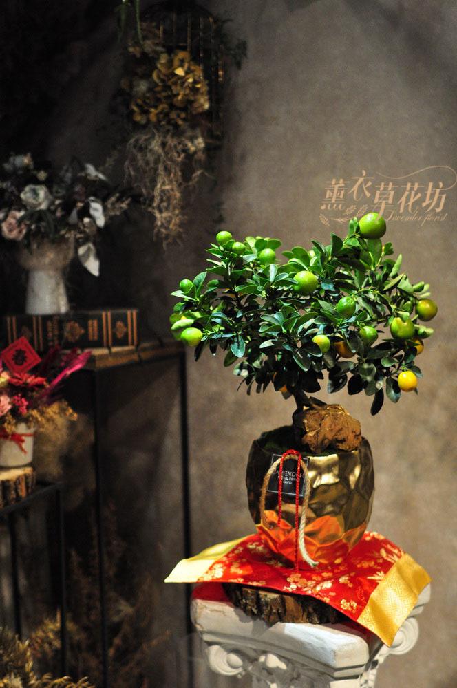 金桔樹盆栽110012216
