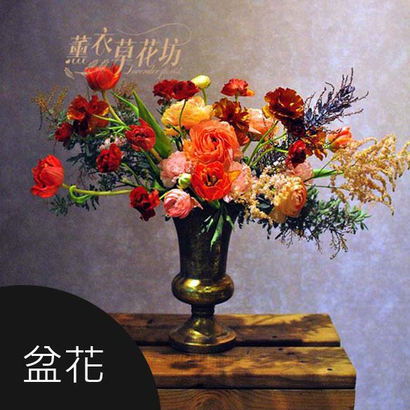 盆花,講台花,會議花