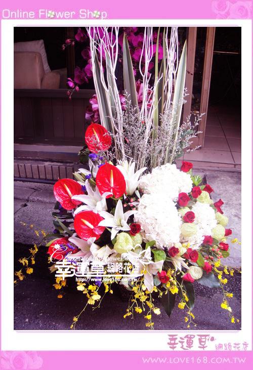 C46優質盆花
