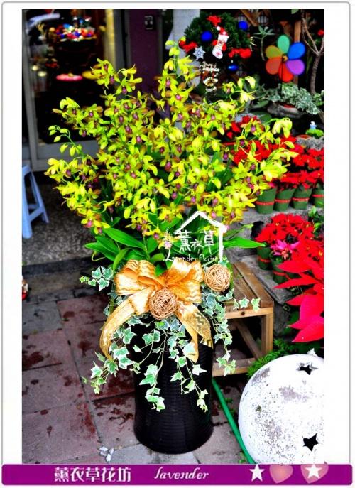 石斛蘭蘭花25朱c113001
