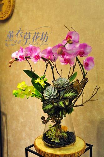 蝴蝶蘭&玻璃設計107101503