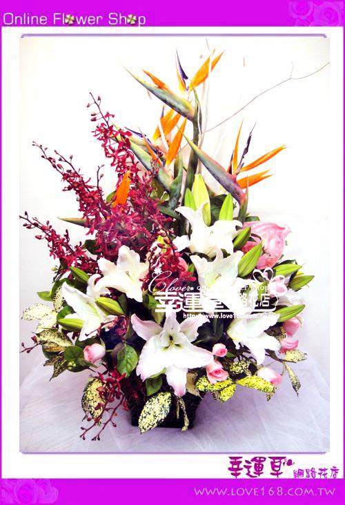 C43優質盆花