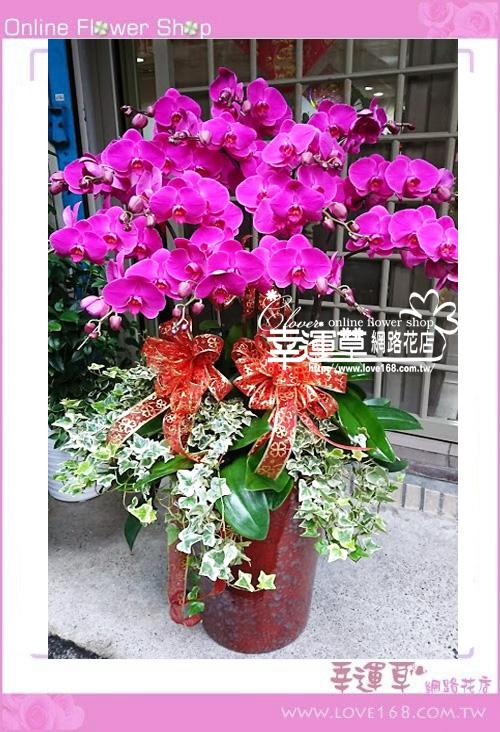 D0207優質蘭花15株