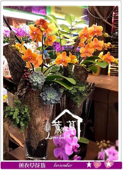 蝴蝶蘭 設計 107011415