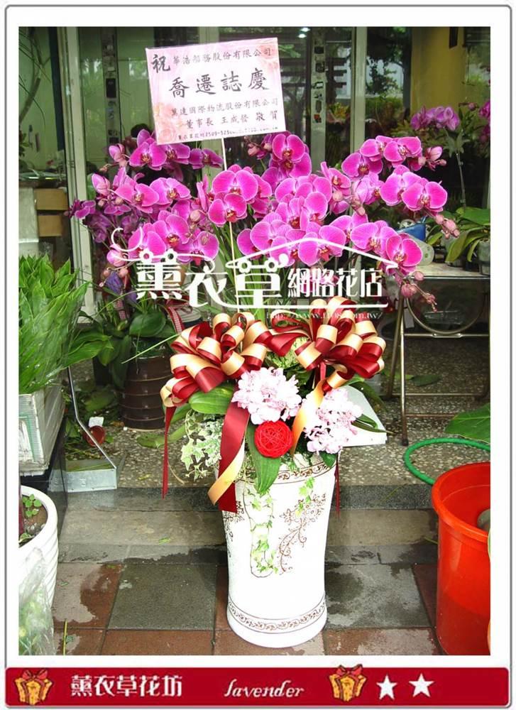 高雅蝴蝶蘭10株y7158