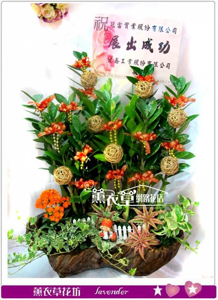 仿木頭金錢樹盆栽y4007