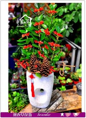 金錢樹盆栽c091606