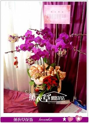 高雅蝴蝶蘭7朱y33199