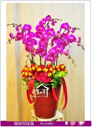 蘭花設計8株b051709