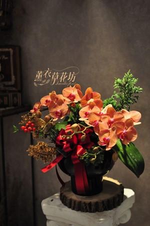 蝴蝶蘭/蘭花/設計108011607