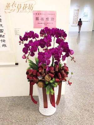 高雅蝴蝶蘭設計108101218
