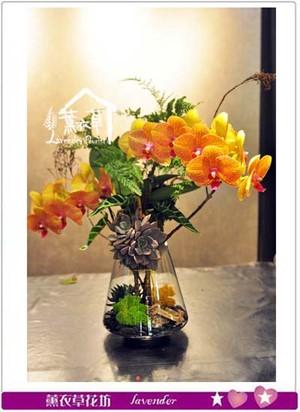 蝴蝶蘭設計 107071603