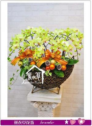 黃金蝴蝶蘭16株b111107