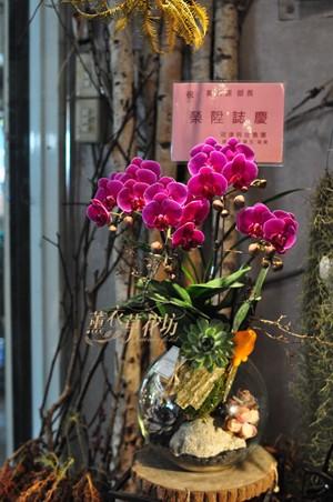蝴蝶蘭&玻璃缸/多肉設計 109010702