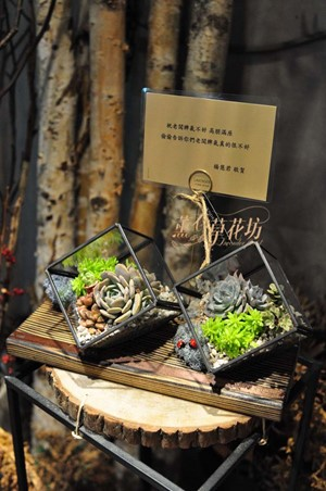 多肉植物&立體玻璃缸設計一組107043002