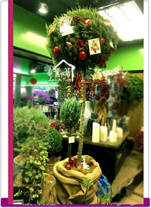 翠柏聖誕樹c111911