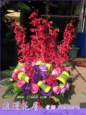盆花F41