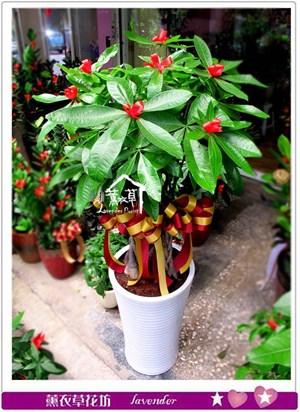 發財樹盆栽c071905