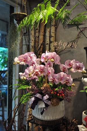 高雅蝴蝶蘭設計108101802