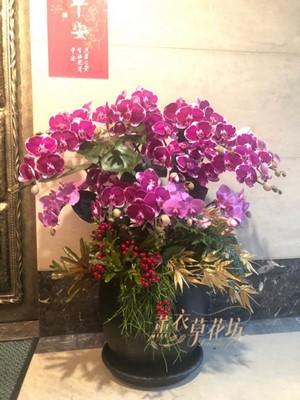 高雅蝴蝶蘭設計 110091801