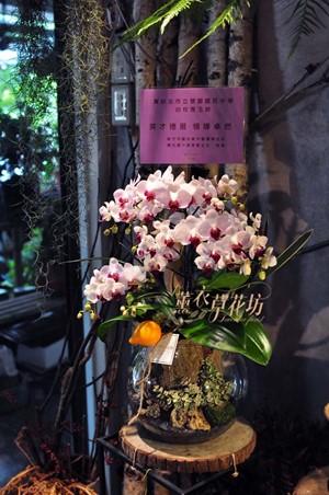 蝴蝶蘭設計107060117