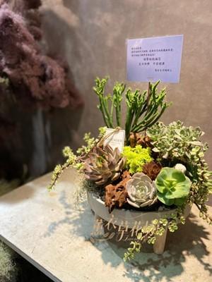 多肉植物設計 11001115