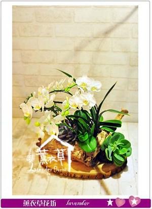 蝴蝶蘭~造型款 106050215