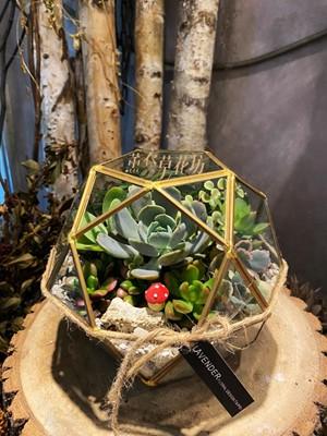 多肉植物設計~玻璃款 109101520