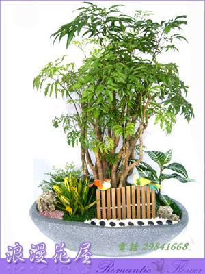 富貴樹組合盆栽 3-78