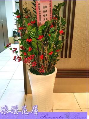 金錢樹盆栽 3-156