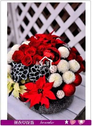 聖誕盆花c111905