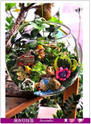 玻璃缸組合盆栽c091227