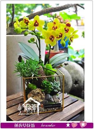 缺貨-蝴蝶蘭&多肉植物& 玻璃缸設計107053008