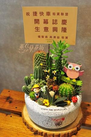 仙人掌植物設計107101703