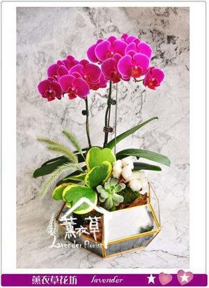蝴蝶蘭設計 106102104