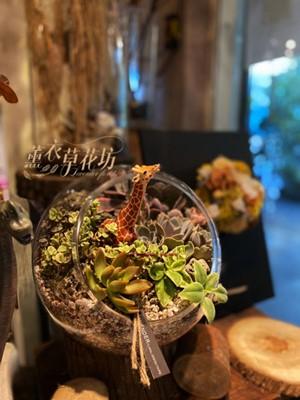 多肉植物&玻璃缸設計 110071402
