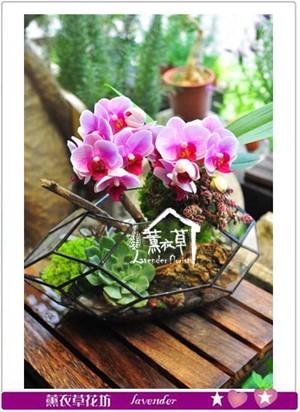 玻璃鋼&蝴蝶蘭設計 107031105