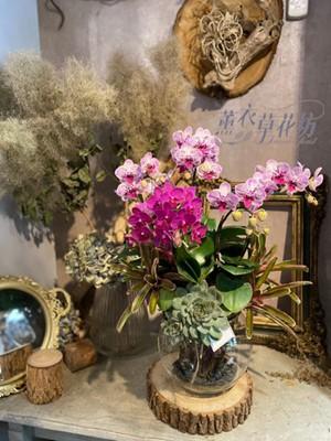 玻璃缸&蘭花&多肉設計 110083101