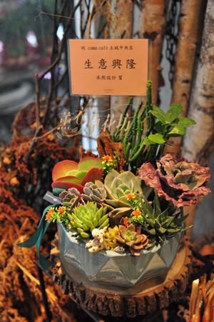 仙人掌&多肉植物設計109033012